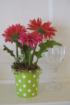 3 gerbera daisies in green polka dots cathyswraps